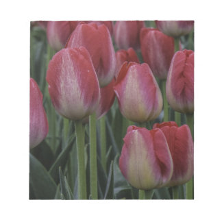 Tulips in the Spring Memo Note Pad