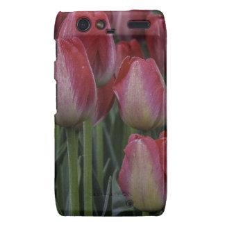 Tulips in the Spring Motorola Droid RAZR Cover