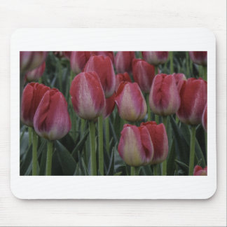 Tulips in the Spring Mouse Pad