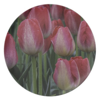 Tulips in the Spring Party Plate