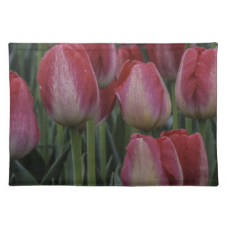 Tulips in the Spring Placemats
