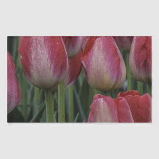 Tulips in the Spring Rectangular Sticker