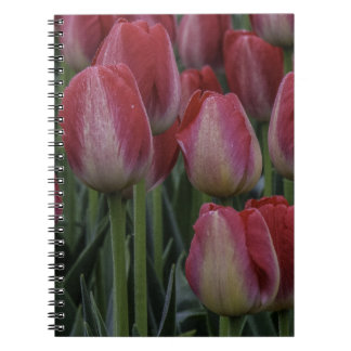 Tulips in the Spring Spiral Notebooks