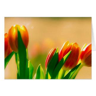 Tulips in the sun card