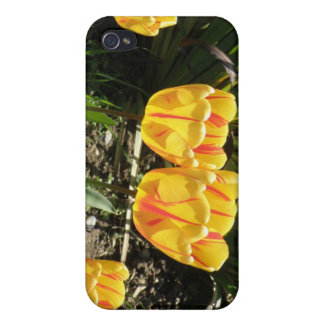 Tulips in the Sun  Case For iPhone 4