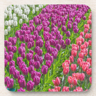 Tulips in three colours hard plastic coasters