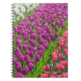 Tulips in three colours notebook