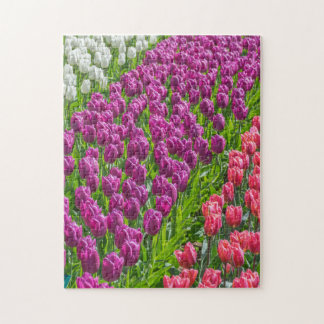 Tulips in three colours photo puzzle