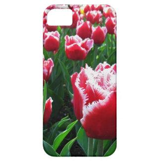 Tulips iPhone 5 Case