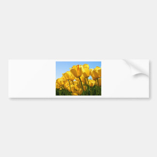 Tulips jpg bumper sticker