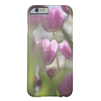 Tulips, Keukenhoff Gardens, Netherlands. Barely There iPhone 6 Case