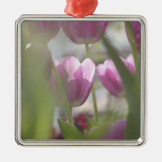 Tulips, Keukenhoff Gardens, Netherlands. Silver-Colored Square Decoration