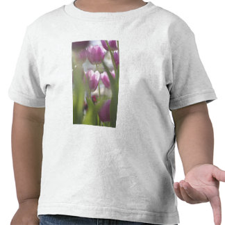 Tulips, Keukenhoff Gardens, Netherlands. Shirts