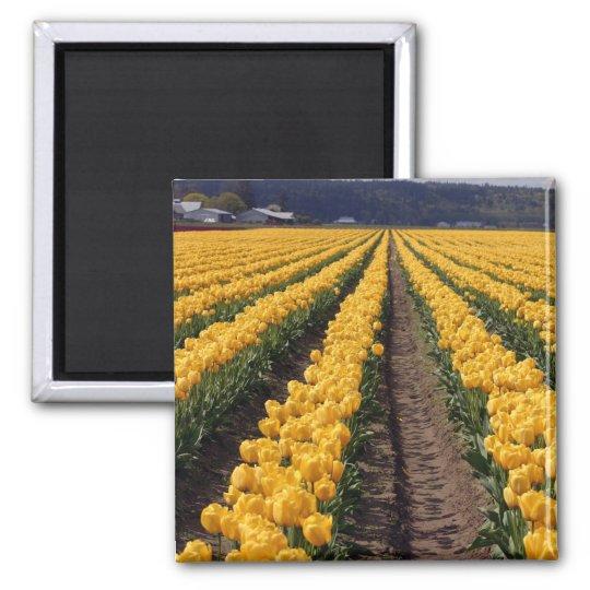 tulips kitchen magnet