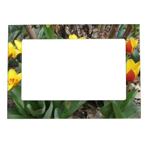 Tulips Magnetic Photo Frame