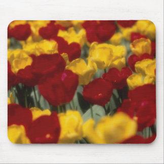 Tulips Mousepads