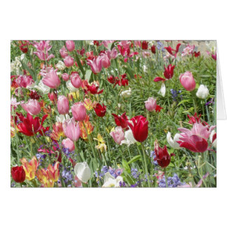 Tulips, National Cathedral Garden Card