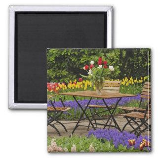 Tulips of table in garden, Keukenhof Gardens, Magnet