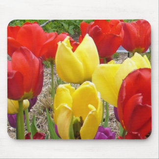 Tulips of the Botanical Garden Mouse Pad