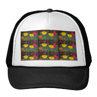 Tulips polychrome flowering, photo extrudes, hats
