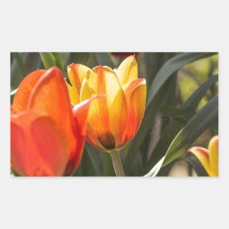 Tulips Rectangular Sticker