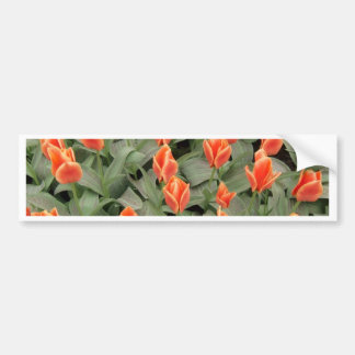 tulips red bumper stickers