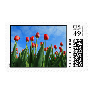 Tulips red flowers beautiful photo postage stamp