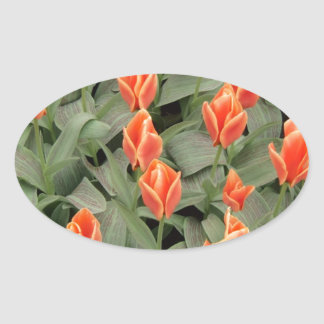 tulips red oval sticker