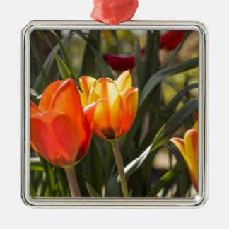 Tulips Silver-Colored Square Decoration