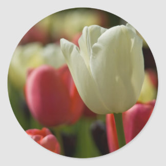 Tulips Sticker | Sticker Tulpen