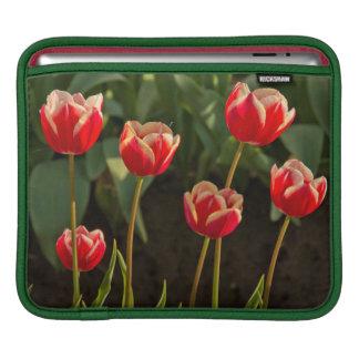 Tulips, Tulip Festival, Woodburn, Oregon, USA 1 Sleeves For iPads