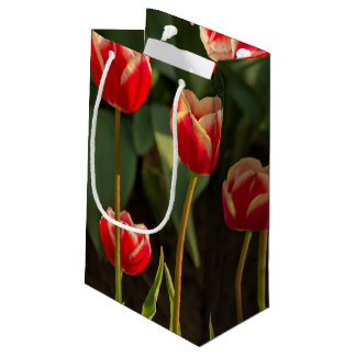 Tulips, Tulip Festival, Woodburn, Oregon, USA 1 Small Gift Bag