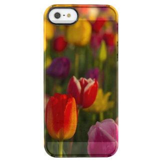 Tulips, Tulip Festival, Woodburn, Oregon, USA 2 Clear iPhone SE/5/5s Case