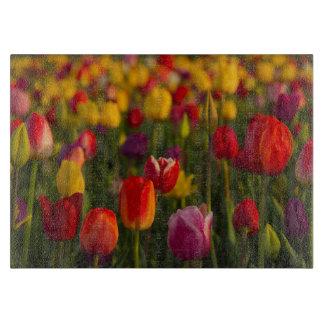 Tulips, Tulip Festival, Woodburn, Oregon, USA 2 Cutting Board