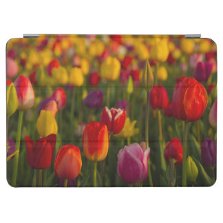 Tulips, Tulip Festival, Woodburn, Oregon, USA 2 iPad Air Cover