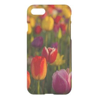 Tulips, Tulip Festival, Woodburn, Oregon, USA 2 iPhone 8/7 Case