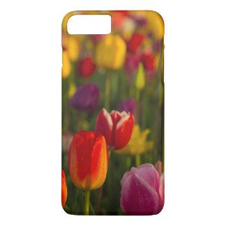 Tulips, Tulip Festival, Woodburn, Oregon, USA 2 iPhone 8 Plus/7 Plus Case