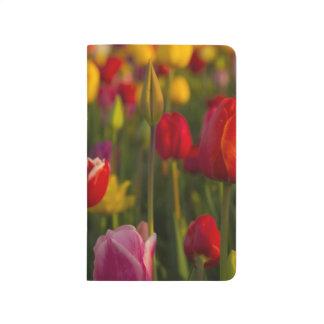 Tulips, Tulip Festival, Woodburn, Oregon, USA 2 Journals