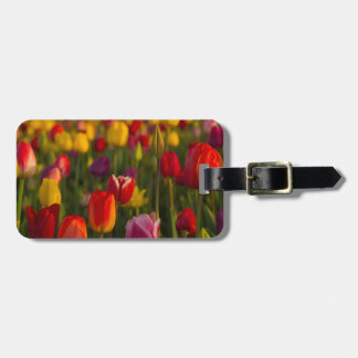 Tulips, Tulip Festival, Woodburn, Oregon, USA 2 Luggage Tag