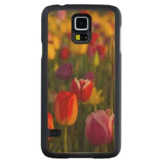 Tulips, Tulip Festival, Woodburn, Oregon, USA 2 Maple Galaxy S5 Slim Case