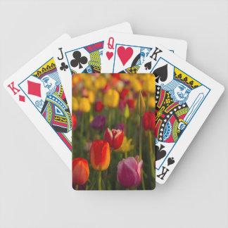 Tulips, Tulip Festival, Woodburn, Oregon, USA 2 Poker Deck