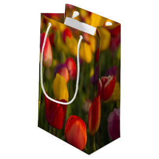 Tulips, Tulip Festival, Woodburn, Oregon, USA 2 Small Gift Bag