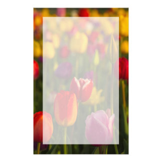 Tulips, Tulip Festival, Woodburn, Oregon, USA 2 Stationery