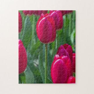 Tulips up close photo puzzle