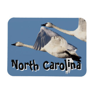 Tundra Swan Birds Wildlife Animals NC Magnet