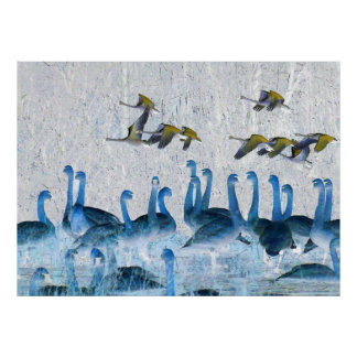Tundra Swan Birds Wildlife Animals Poster