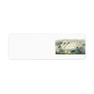 Tundra Swan by Audubon