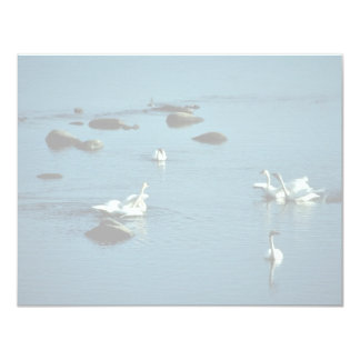 Tundra Swans on Water 11 Cm X 14 Cm Invitation Card