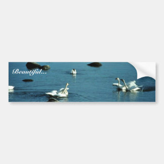 Tundra Swans on Water Bumper Sticker