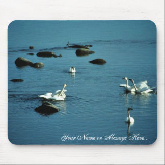 Tundra Swans on Water Mouse Pad